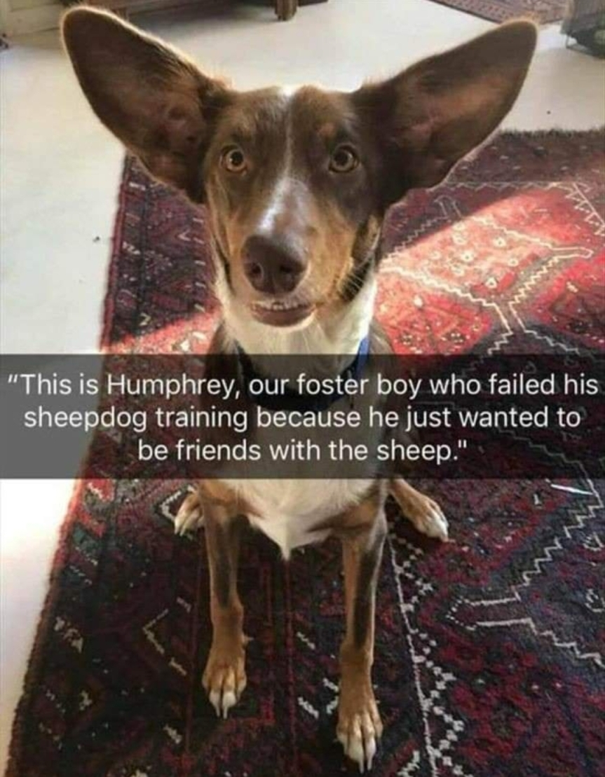 Be Like Humphrey 💜